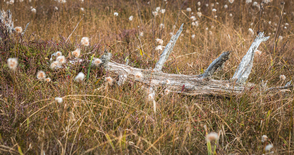 Log at big Run Bog