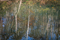 Prickett Creek Reflection